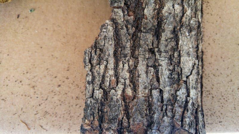 Vieux fond en bois sec de morceau photographie stock