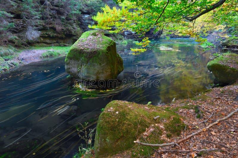 Vieux forst magique avec les feuilles oranges tombées dans la rivière Forêt mystique d'automne photos libres de droits