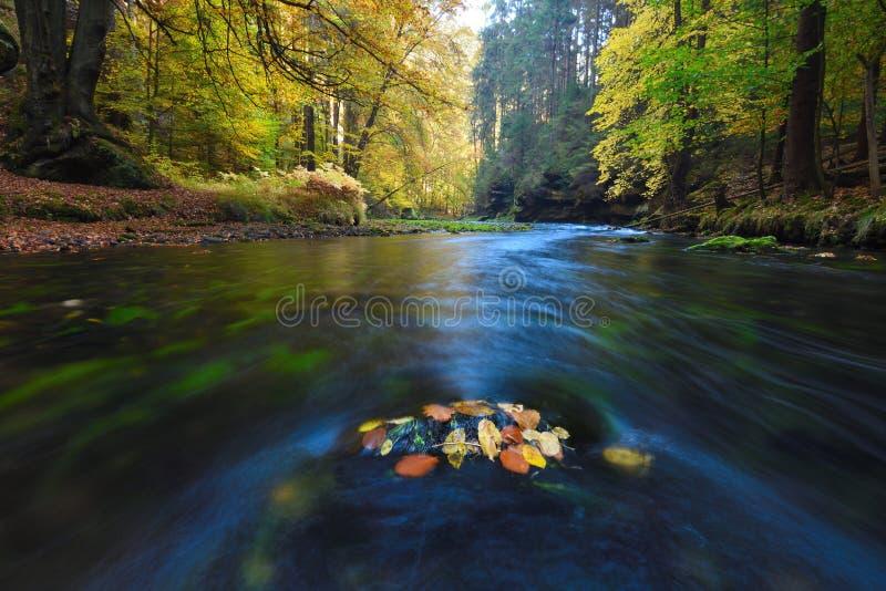 Vieux forst magique avec les feuilles oranges tombées dans la rivière Forêt mystique d'automne photos stock