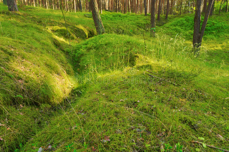 Vieux fossé dans l'†de forêt «le reste de la deuxième guerre mondiale photographie stock libre de droits