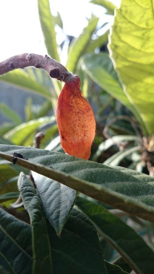 Vieux fruit photos stock