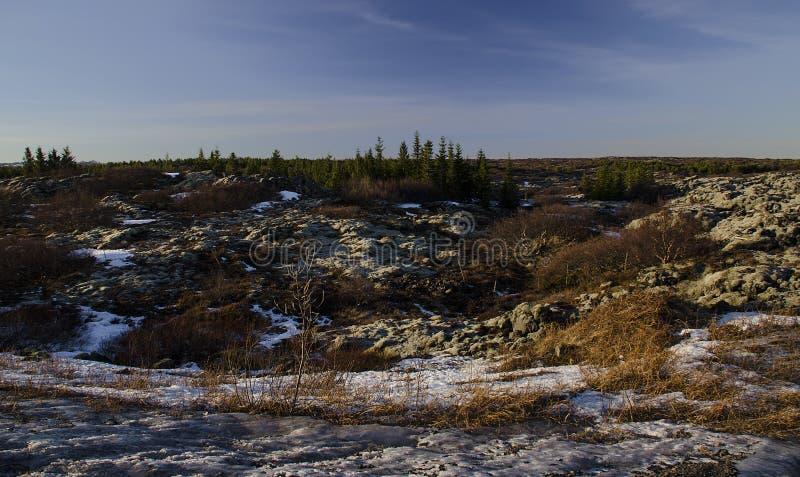 Vieux gisements de lave énormes envahis avec de la mousse islandaise dans une couleur verte en plein air image libre de droits