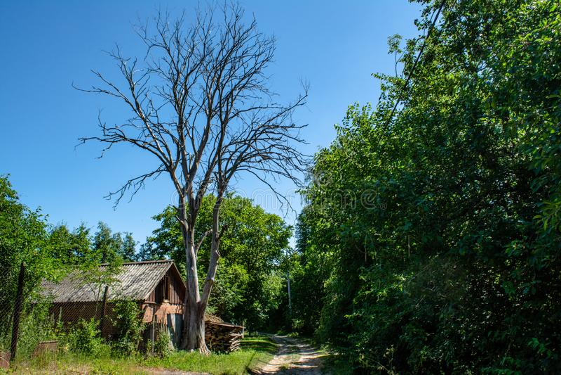 Vieux hangar près de l'arbre mort sec situé dans le village image libre de droits