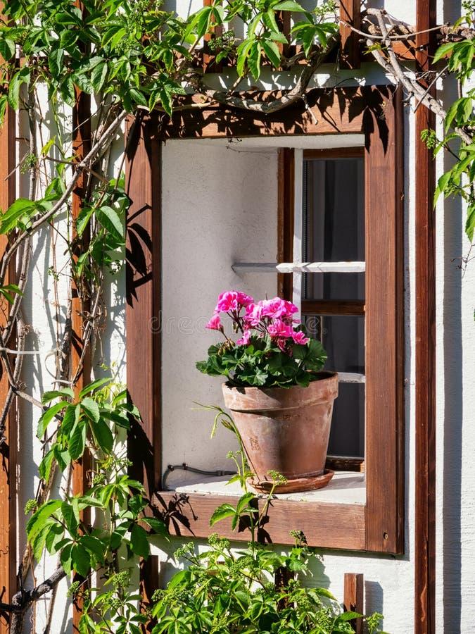 Vieux hublot et fleurs photos stock