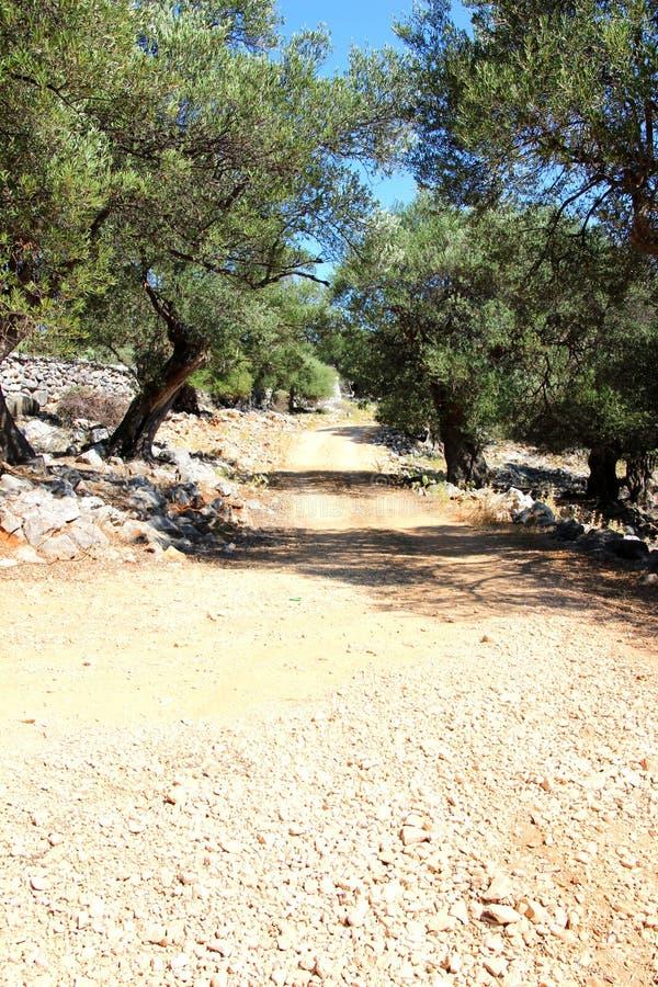Vieux jardin d'olivier dans Lun photo libre de droits