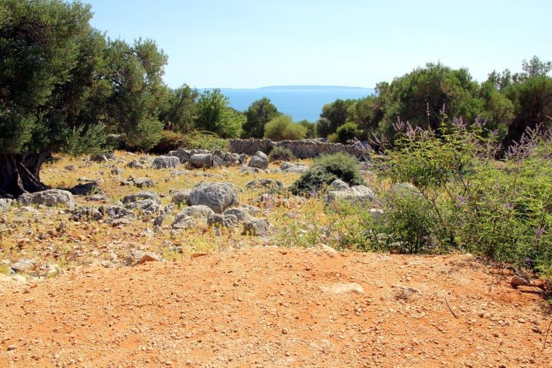 Vieux jardin d'olivier dans Lun image libre de droits