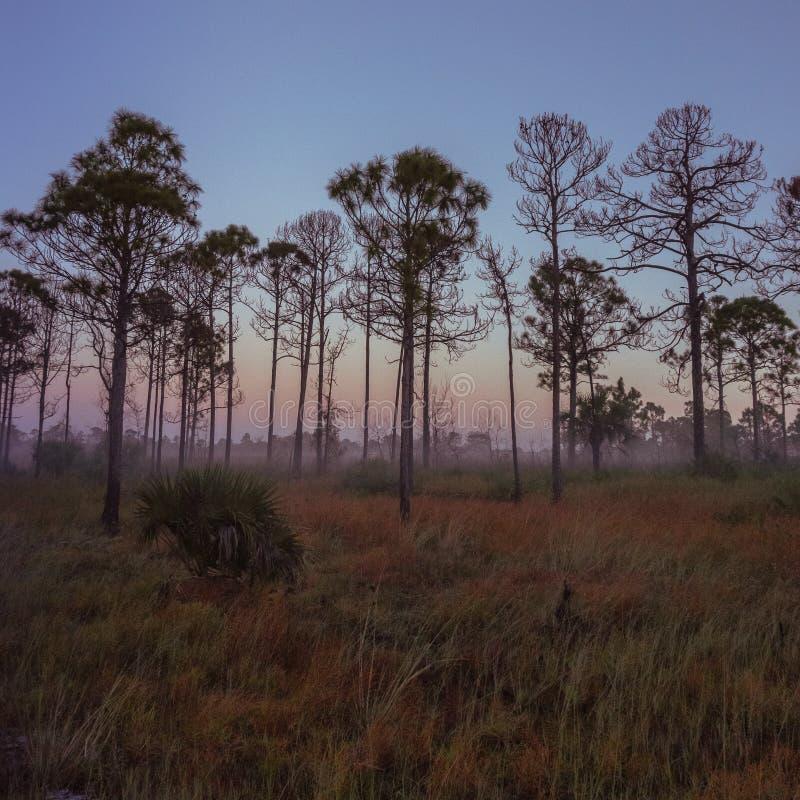 Vieux lever de soleil de la Floride photos libres de droits