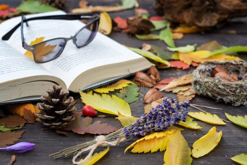 Vieux livres parmi les feuilles d'automne sous la lumière du soleil douce photo libre de droits
