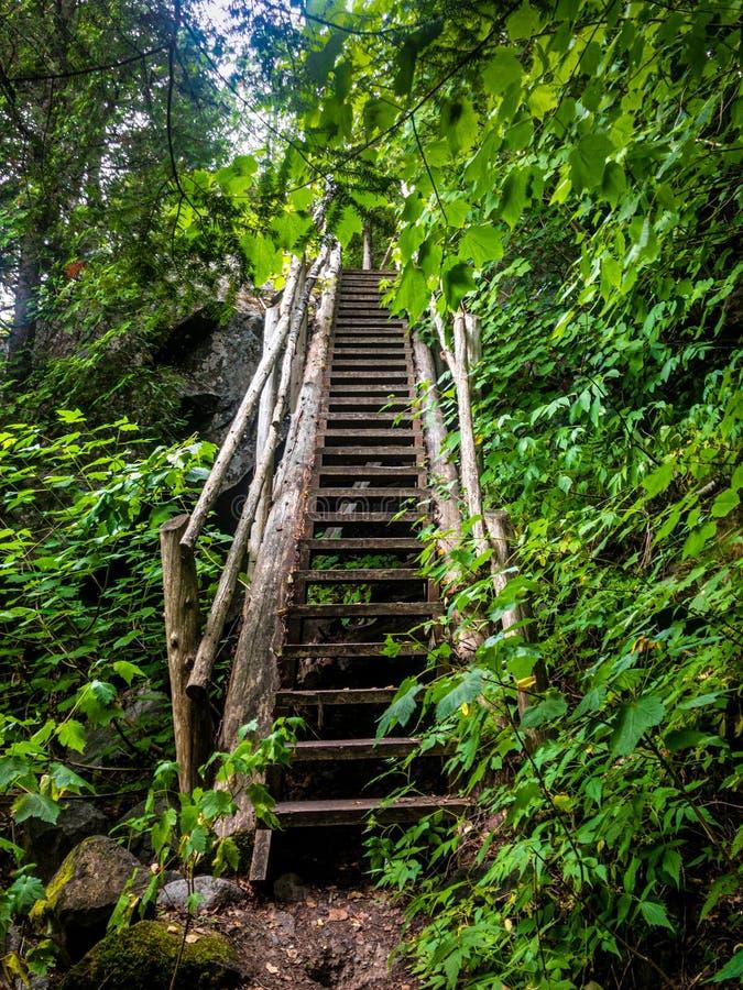 Vieux longs escaliers en bois de forêt image libre de droits