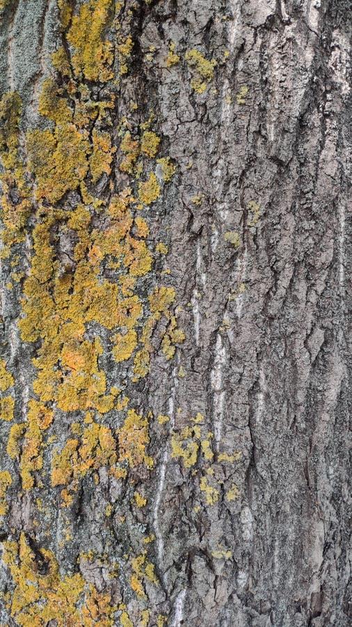 Vieux mod?le en bois de fond de texture d'arbre photographie stock