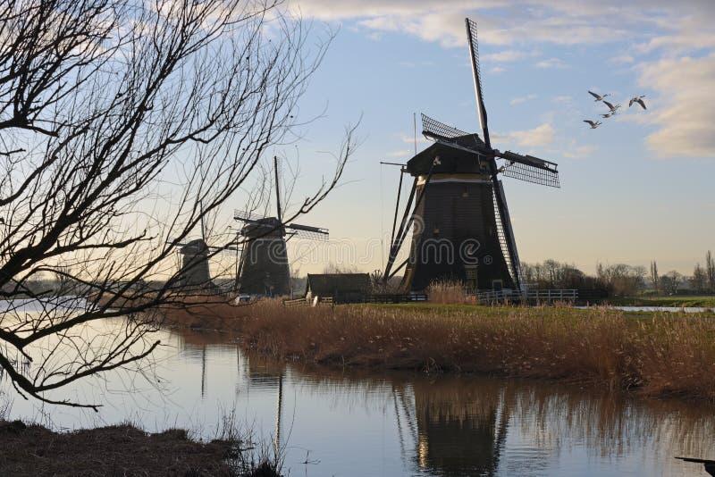 3 vieux moulins à vent néerlandais dans la campagne avec des oiseaux photographie stock