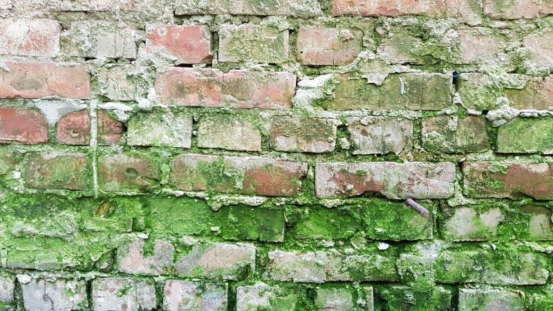 Vieux mur de briques rouge superficiel par les agents de terre cuite avec de la mousse verte et les joints grunges de ciment Fond photos stock