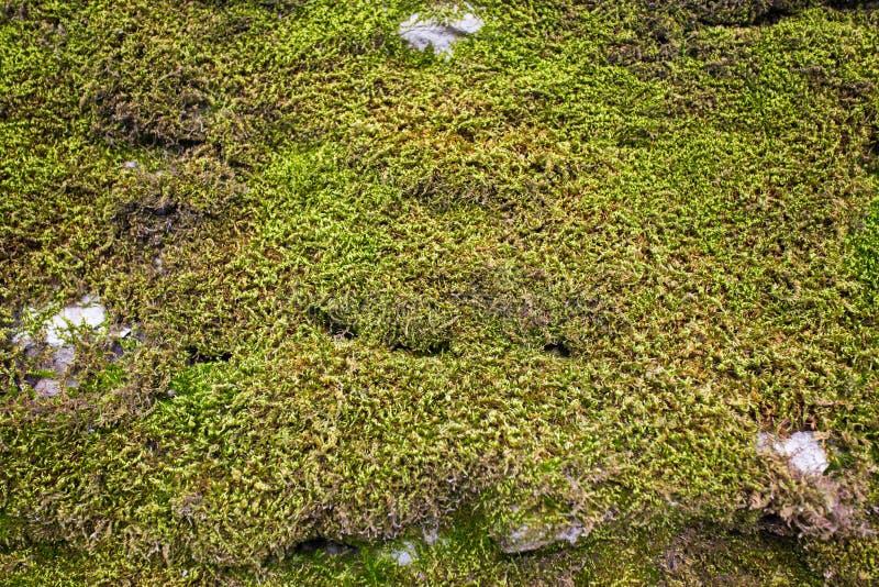 vieux mur en pierre avec de la mousse et le lichen photo stock image du borne roche 38581136. Black Bedroom Furniture Sets. Home Design Ideas