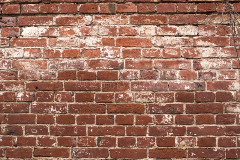 Vieux mur minable de rouge de brique avec le stuc blanc, texture détaillée Fond sale images stock