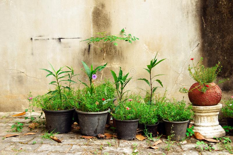 Vieux mur minable et usines colorées dans les pots photographie stock