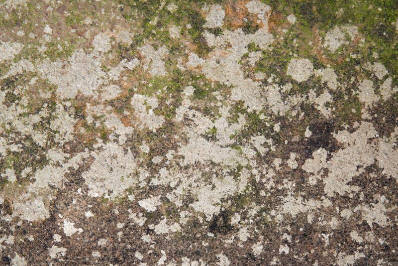 Vieux mur moisi et négligé 2 photographie stock libre de droits