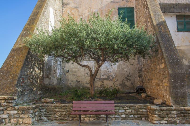 Vieux olivier et banc dans la ville italienne photo stock
