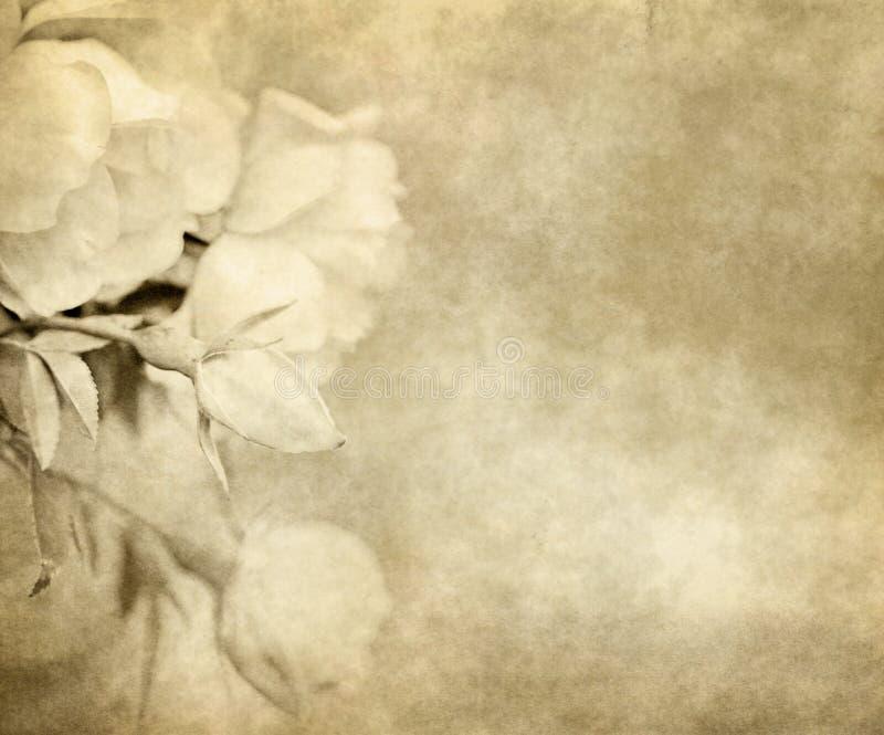 Vieux papier avec des roses illustration libre de droits