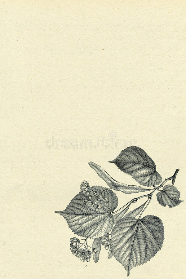 Vieux papier avec la vignette florale illustration de vecteur