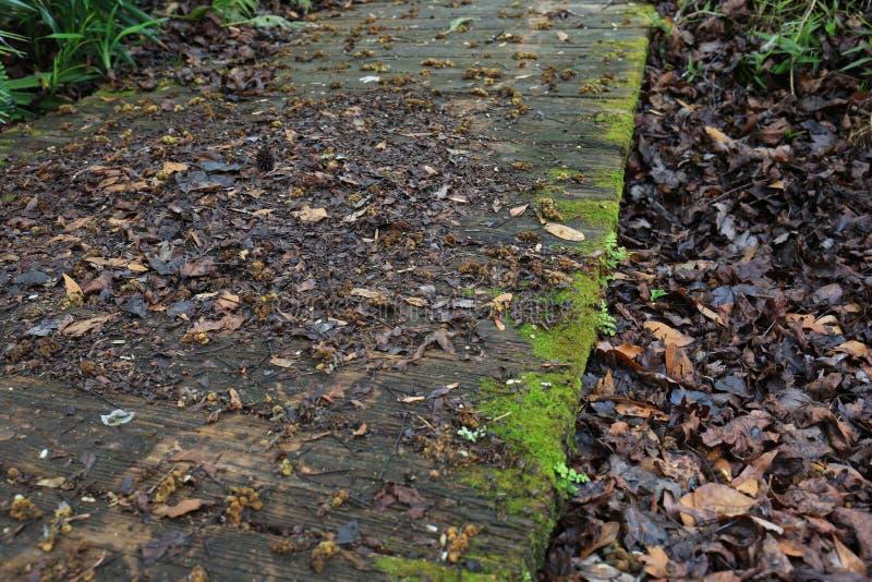 Vieux passage couvert en bois avec de la mousse image stock