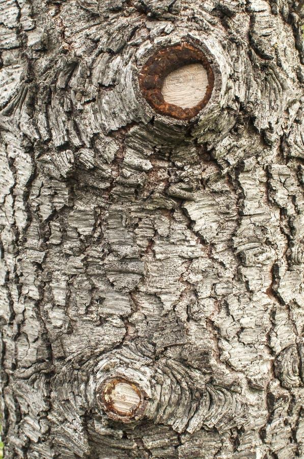 Vieux plan rapproché d'écorce d'arbre de cèdre photo stock