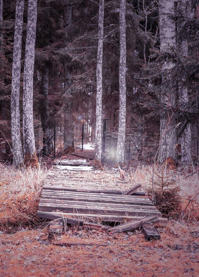 Vieux pont dans les bois photos libres de droits