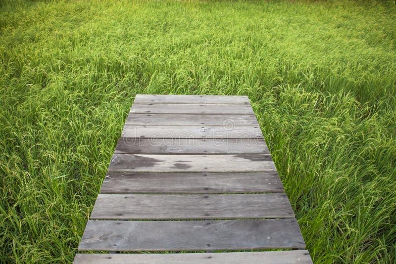 Vieux pont en bois sur le gisement de riz photographie stock