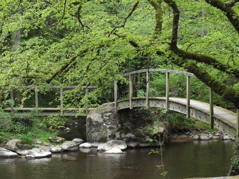 Vieux ponts en bois le long des ruines de forêt photos libres de droits