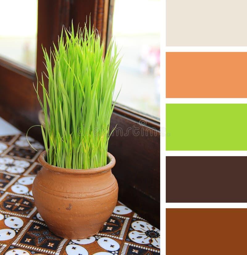 Vieux pot avec l'herbe sur la table échantillons de palette de couleurs image libre de droits