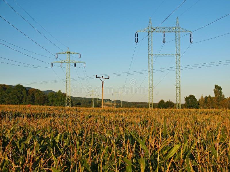 Vieux poteaux électriques grands et petits au milieu du champ de maïs. image stock