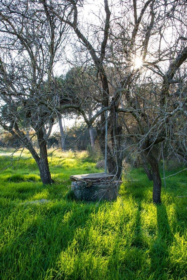 Vieux puits d'eau sur le champ vert avec des fleurs sous l'arbre sans feuilles sur le winte images libres de droits