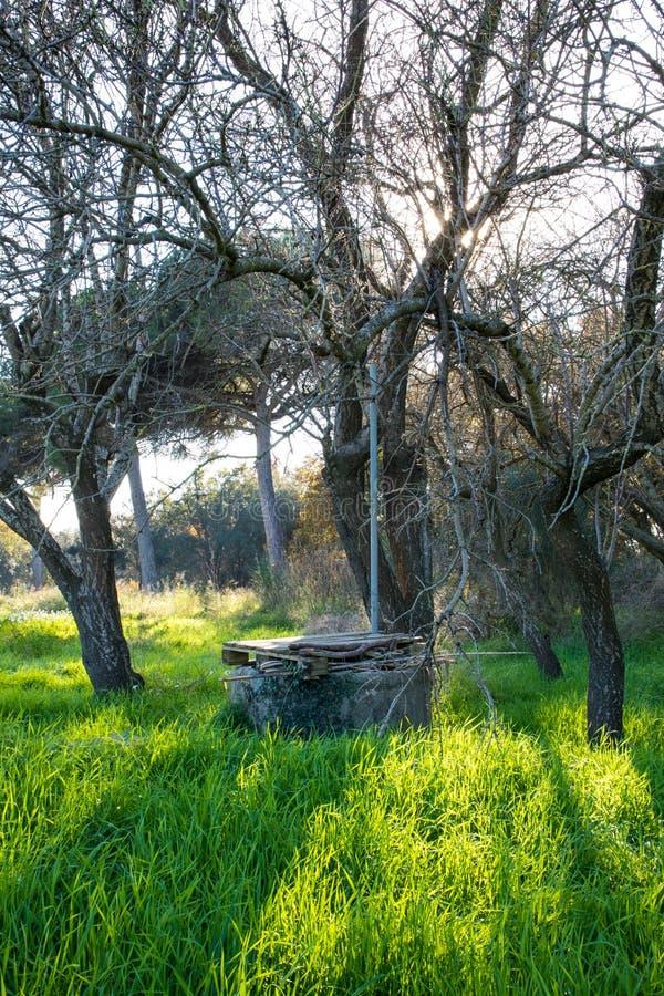 Vieux puits d'eau sur le champ vert avec des fleurs sous l'arbre sans feuilles sur le winte image stock