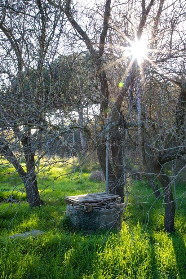 Vieux puits d'eau sur le champ vert avec des fleurs sous l'arbre sans feuilles sur le winte photographie stock