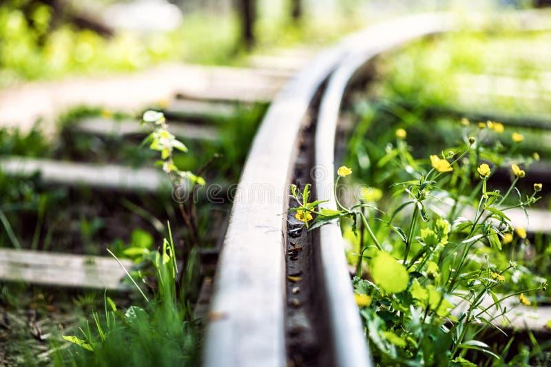 Vieux rails herbeux sur les voies de chemin de fer abandonnées photo stock