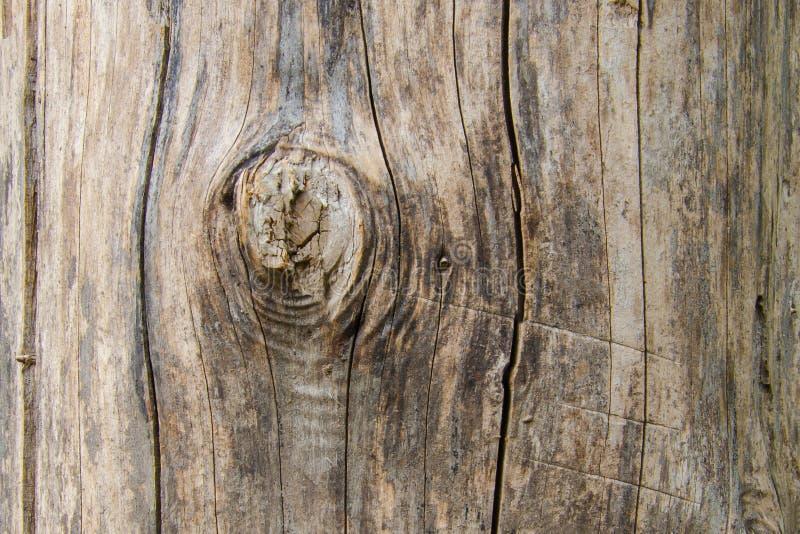 Vieux rondin sec avec une branche cassée photos stock