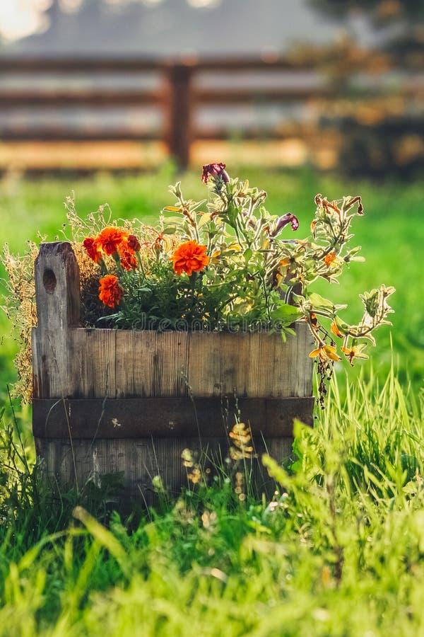 Vieux seau d'eau en bois rustique rempli de fleurs rouges sur l'herbe verte pendant le lever de soleil photo libre de droits