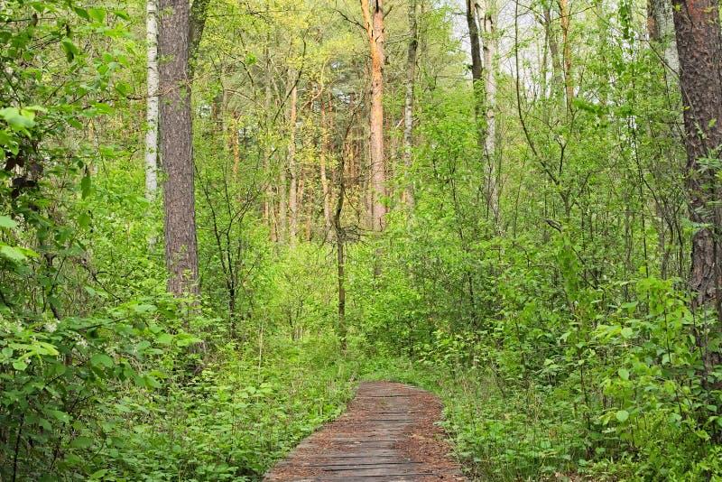 Vieux sentier piéton en bois dans une région dense de Volyn de forêt l'ukraine photographie stock libre de droits