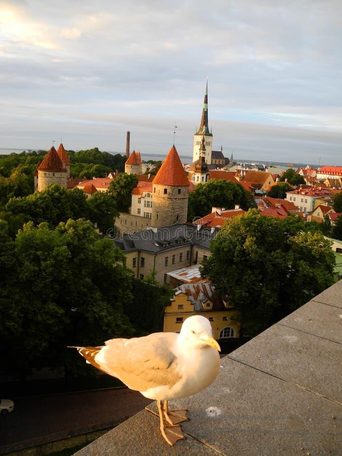 Vieux Tallinn, Estonie image stock