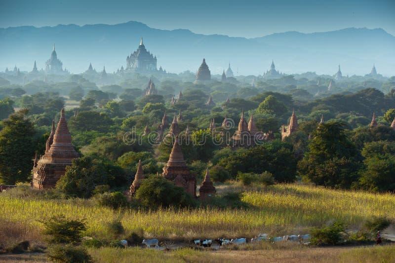 Vieux temps de lever de soleil de champ de pagoda chez Bagan images stock