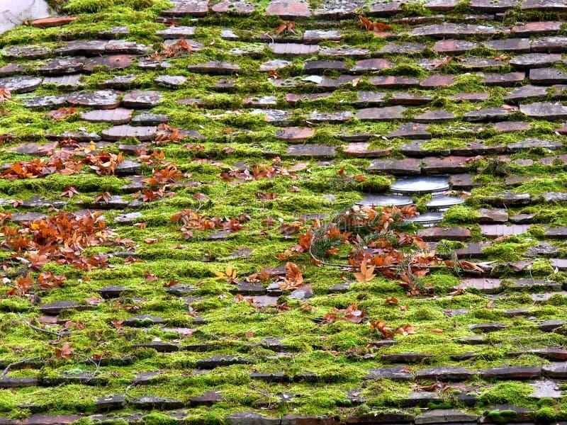Vieux toit carrelé complètement de mousse et des feuilles photo libre de droits