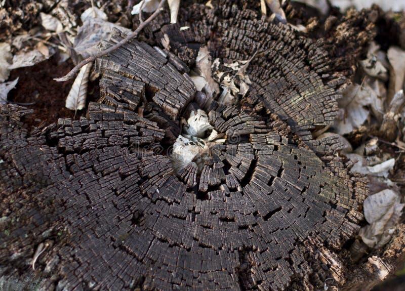 Vieux tronçon d'arbre images stock