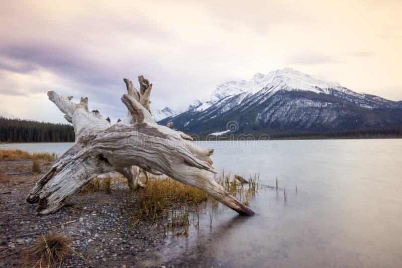 Vieux tronçon d'arbre s'étendant sur le rivage du lac calme avec une haute montagne couverte par la neige derrière, parc national photos stock