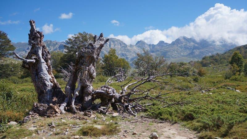 Vieux tronçon devant des montagnes de la Corse photos stock