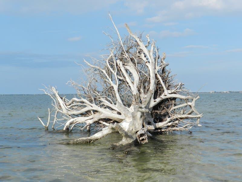 Vieux tronc et racines d'arbre tombés plus d'en rivière photographie stock