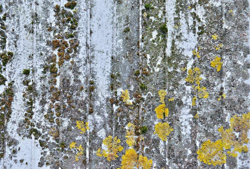 Vieux trottoir gris avec les usines microscopiques photo libre de droits