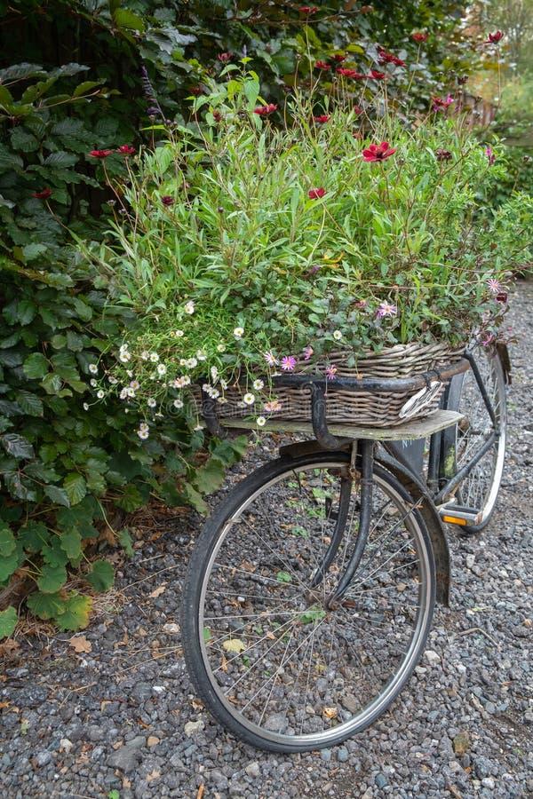 Vieux vélo noir utilisé comme planteur photos libres de droits