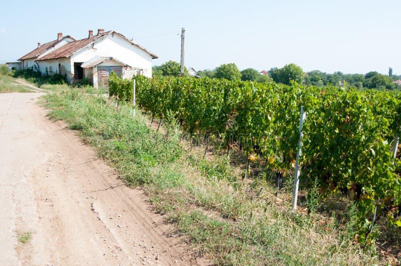 Vieux vignoble et entrepôt photographie stock libre de droits