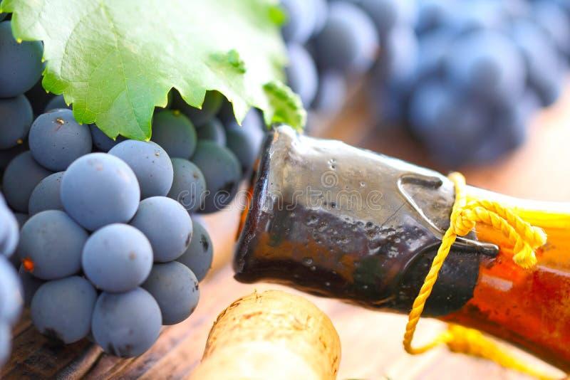 Vieux vin et jeune raisin image stock