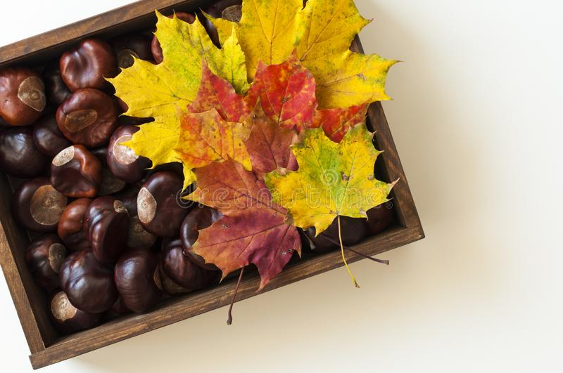 View from above on box from dark wood with chestnuts. Decoration from colorful autumn leaves. White table background with c royalty free stock photography