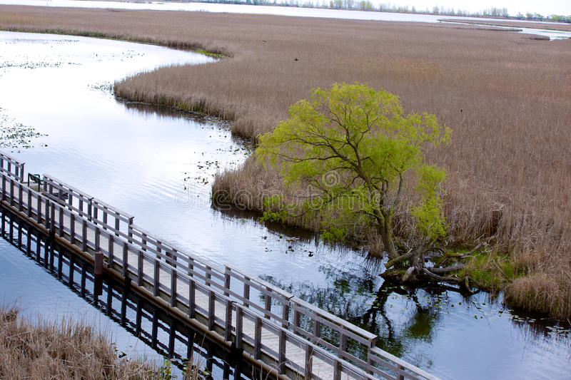 View from above a marsh stock photo